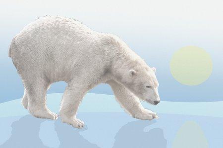 bjørn-gåte-svaret
