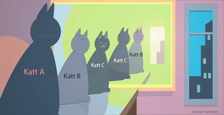Hvor mange katter-svar